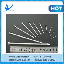 Low Price Common Nails /Iron Nail /Wire Nail Factory Made in China