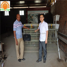 battery hen cages laying hens for sale in china