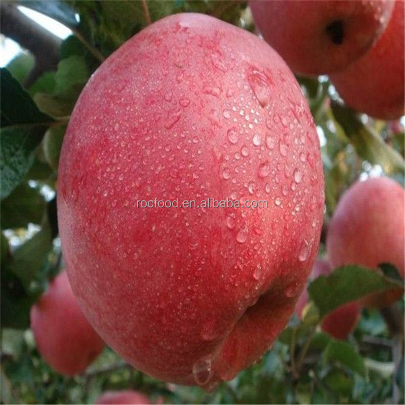Best price Yantai qixia fresh fuji apple fruits exporter in china
