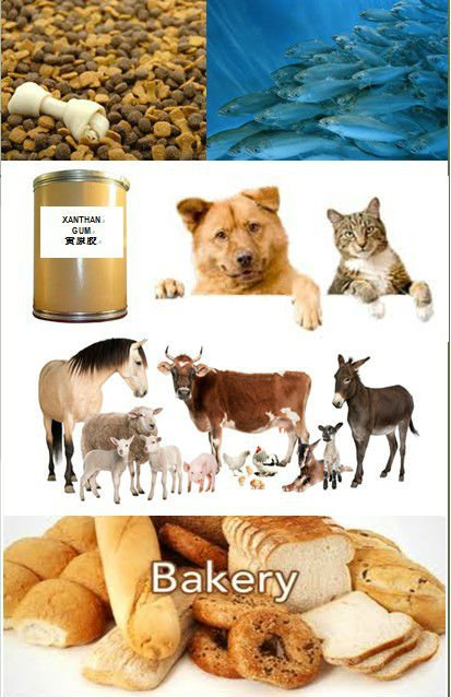20KG Protein 55% For Animal Feeds