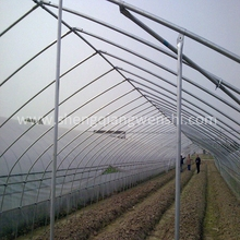 Agriculture farm 10.0m single span tomatos plastic film green house for sale