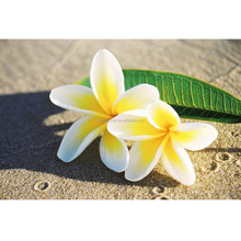 FRANGIPANI FLOWER BEACH SAND IMAGE POSTER 3D PRINT LAMINATED PICTURE