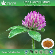 NSF-cGMP Isoflavones Extract Red Clover Anticancer Powder