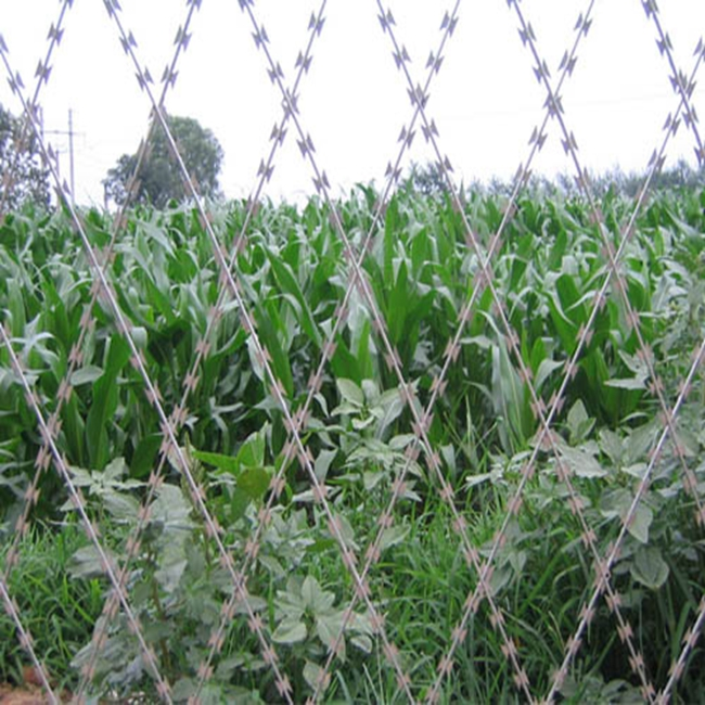 concertina wire mesh fencing razor barbed wire philippines