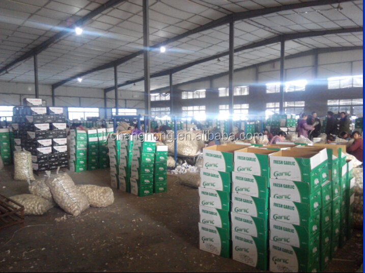 [HOT]2014 China pure white garlic for Mozambique/Kenya