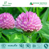 Natural Best Selling 8% Isoflavones Red Clover Extract