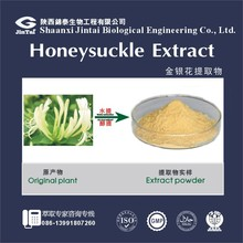 Honeysuckle flower extract 5% Chlorogenic Acid Honeysuckle extract