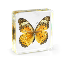 High quality real insects resin acrylic specimen artificial Butterfly Amber