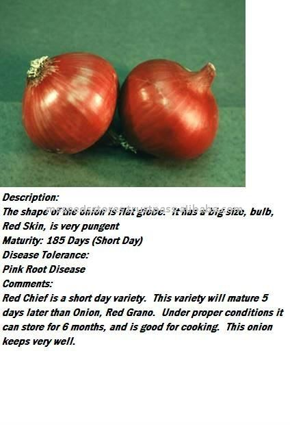 Red King Short Day Hybrid Onion Seeds