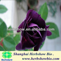 2016 high germination rose seeds for Home and garden