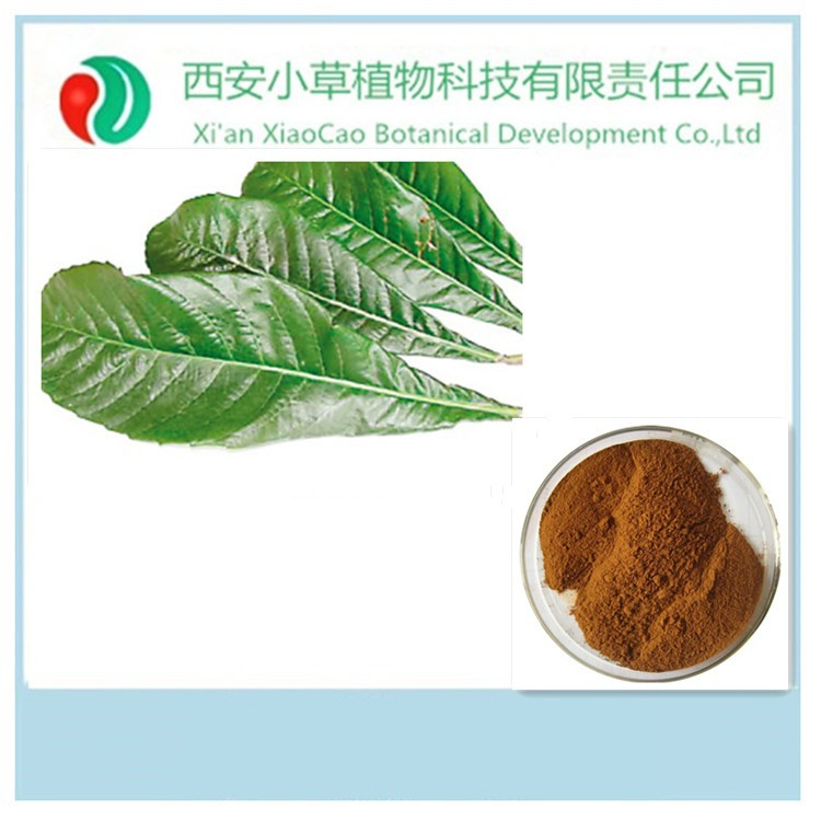 Pure Natural cosmetic ingredients,Loquat leaf extract,Ursolic acid