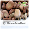 Specification of high quality Fava bean