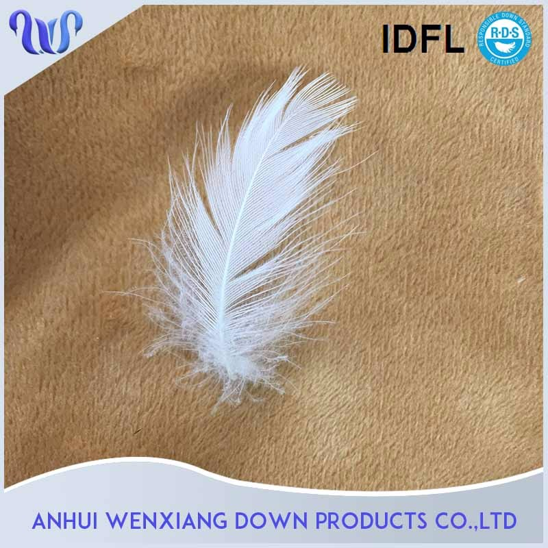 2017 Very Cheap Price Goose Feather