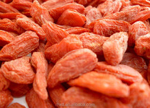 2015 new product organic goji berries/ Lycium sinensis Mill/dry fruits in pakistan/Dried goli berry packed 500pcs/50g 4x 5kg