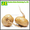 High quality maca P.E