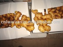 chinese specification fresh ginger
