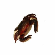 Wholesale Ocean Growing Toys big size Crabs Water Animals