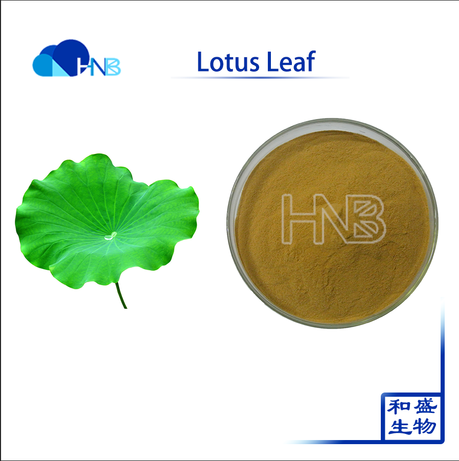 2016 best sell pure natural Lotus Leaf Extract 100% Organic