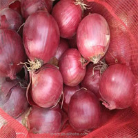 Hot selling bulk fresh different types of red onion importers in singapore with great price
