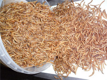 bulk chicken feed microwave dried mealworms