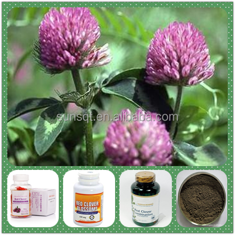 100% Natural Trifolium pratensel L Extract Red Clover Extract Powder