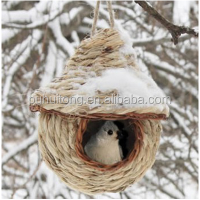 Finch bird nest