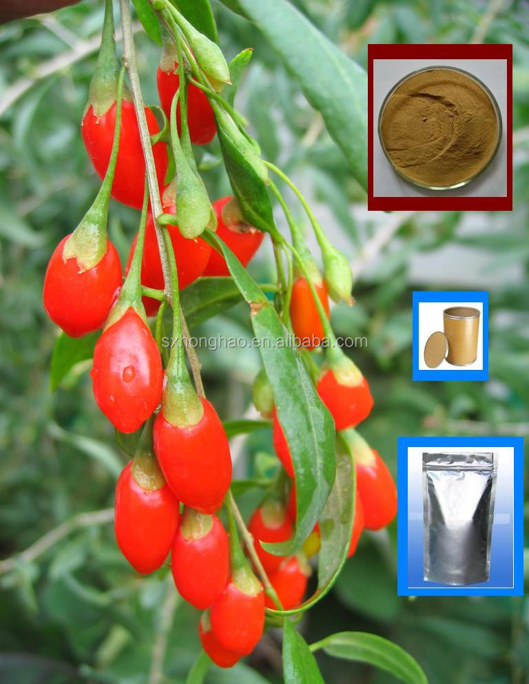 honghao 100% natural goji berry extract powder wholesale