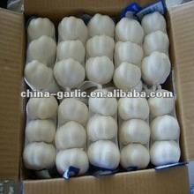 2012' New Crop Garlic Price in China ( FOB , CRF ,CIF Price)