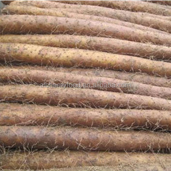 hot sale Chinese fresh yam for buyer from all over the world
