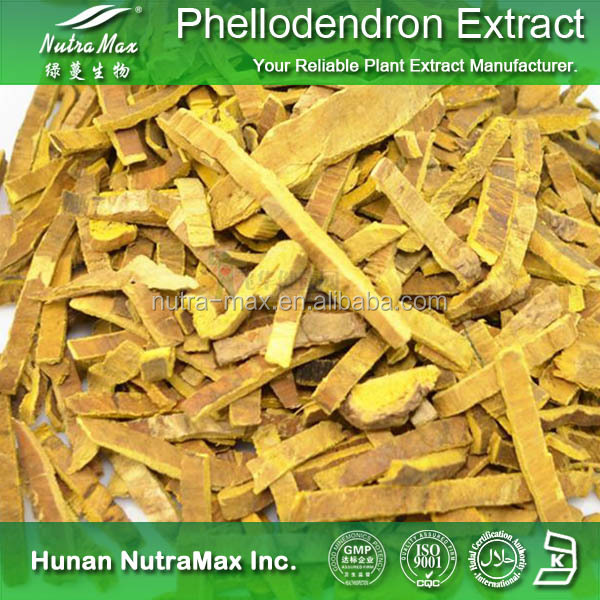 Cortex Phellodendri Chinensis Extract , Amur cork tree Bark Extract , cork tree Bark Extract