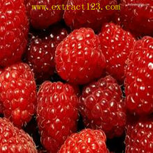 High quality Raspberry extract (Palmleaf Raspberry Fruit Extract)