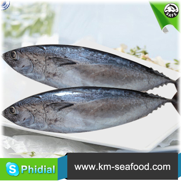 New Arrival Whole Low Frozen Tuna Fish Price