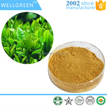 Factory Supply Green Tea Leaf Extract powder