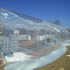 China Suppliers Commercial Agricultural Greenhouse Used