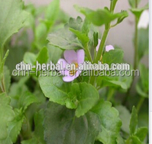 ISO certificate Bacopa Monnieri Extract