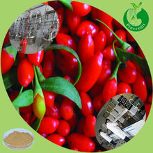 Top Quality Goji Berry Extract Powder Polysaccharides/Ningxia Goji Berry