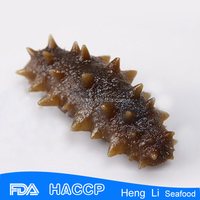 PACIFIC RED SEA CUCUMBER DRIED AND FROZEN and Sea Food