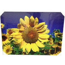 Sun flower giclee canvas print canvas printing for home decoration