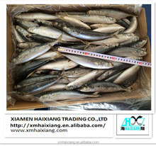 Frozen whole round Muroaji fish for sale