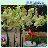 Best Selling fresh preserved flower orchid for wholesale