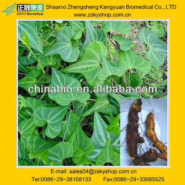GMP Certified Chinese Yam Rhizome Extract Powder With Dioscin
