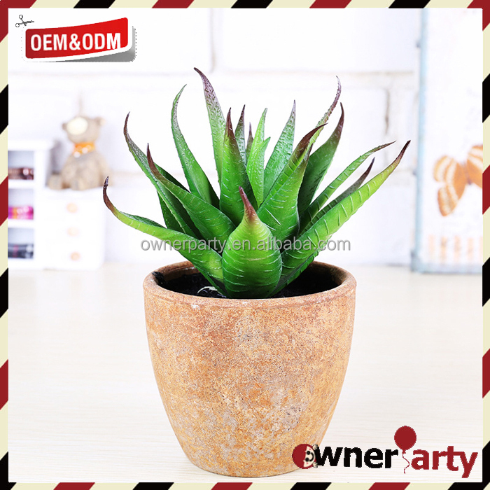 Mini Potted Succulents Plants Decorative House Plants