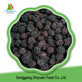 High quality best selling sweet bulk frozen blackberry on sale