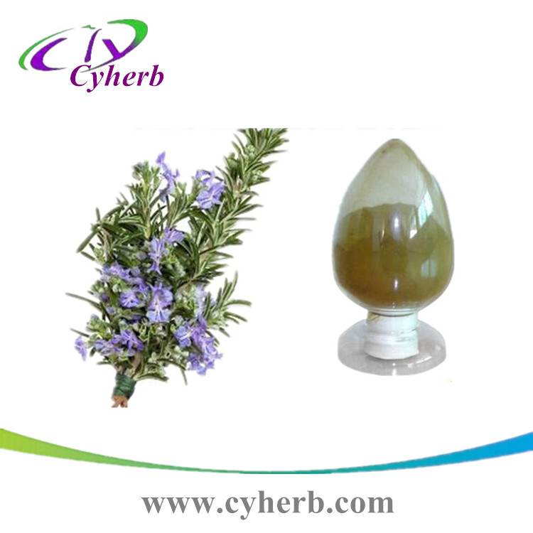 Top sale purity Rosemary Extract Carnosic Acid/ 20% Rosmarinic Acid/ Ursolic Acid in stock with Fast Delivery CAS:3650-09-7