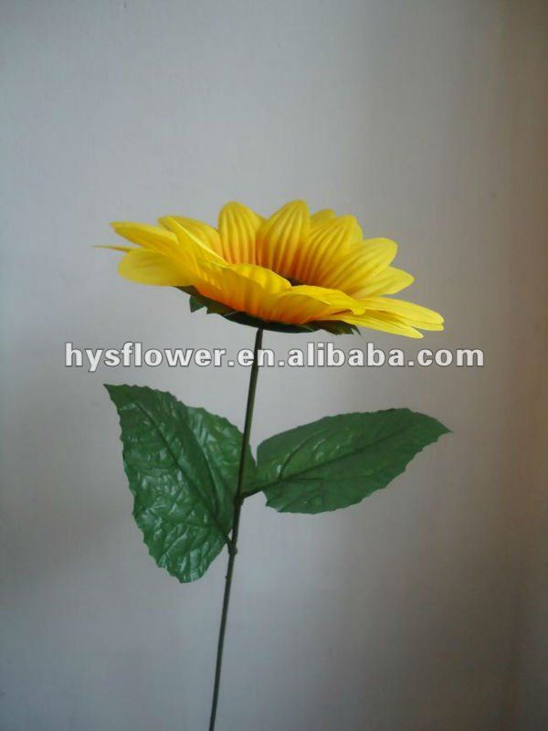 Sunflower in high quality