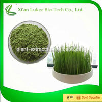 benefits of wheat grass powder/wheat grass powder suppliers/herbal extract and nutritional supplements