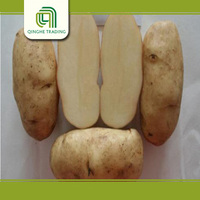 Professional potato sorting and grading with low price