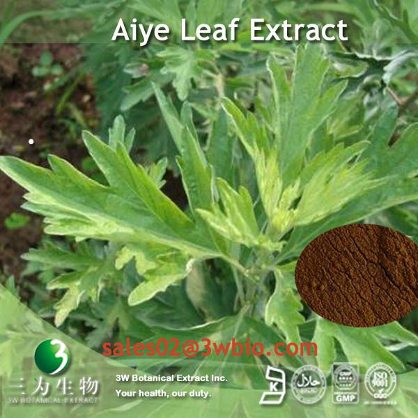 100% Natural Aiye Leaf P.E.in brown powder