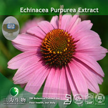 4% Echinacea purpurea Phenolic Compounds For Medicine Use