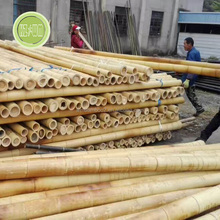 Long bamboo canes